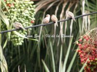 Oiseaux à Bec rose